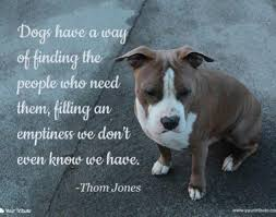 loss of pet loss of pet quotes your tribute