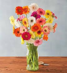 gerbera plant gerbera bouquet flower delivery harry david