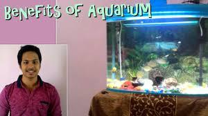 benefits of aquarium health vastu shastra and feng shui hindi benefits of aquarium health vastu shastra and feng shui hindi urdu