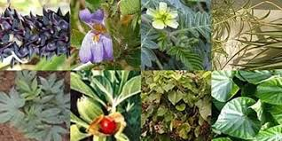 obat pembesar alat vital klg herbal terbukti paling ampuh