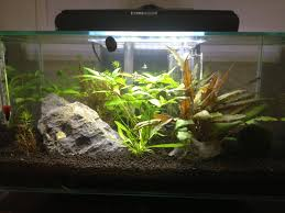 Fluval Edge Aquascape Updated Planted Fluval Edge 6g Plantedtank
