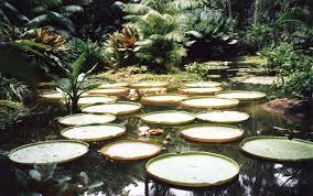 Botanical Gardens In Singapore by Singapore Botanical Gardens A Visit Of Wondrous Nature