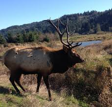 Publiclands Org Washington by Elliott State Forest The Poster Child For What Could Happen To
