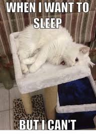 Sleepy Cat Meme - when i want to sleep but i can t grumpy cat meme on me me