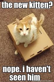 Funny Kitten Meme - cute kitten quotes pets wallpapers