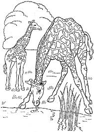 kids fun 45 coloring pages giraffe