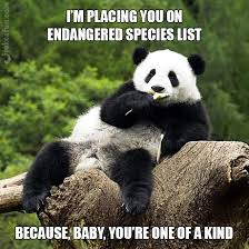 Pick Up Line Panda Meme - joke4fun memes panda pickup line