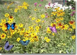 spring blackhillsgarden com gardening experience in the black