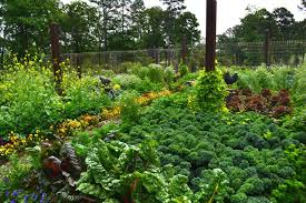 Edible Garden Ideas Design A Beautiful Edible Garden Inspiration