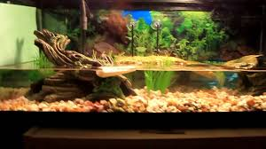 fish tank turtle tank decorations redearslider com view topic need full size of fish tank decorations forle tankturtle tank decoration ideasdiy decorationsdecorations diy ideas turtle tank