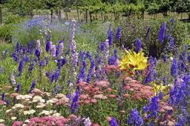 delphinium flowers delphinium plant companions tips on companion planting with