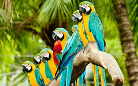 exotic animals what exotic animal should be your pet playbuzz
