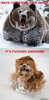 Coke Bear Meme - not even once