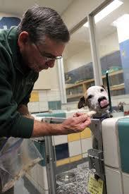 homeless houston dogs enjoy thanksgiving dinner