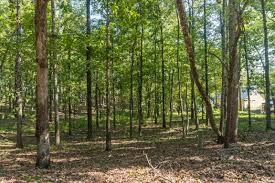 lot 15 lakeview dr eclectic al 36027 us lake martin real estate
