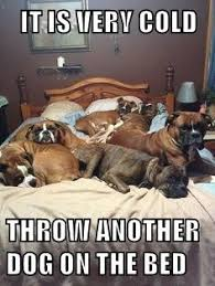 Funny Cold Meme - it is very cold throw another dog on the bed cheezburger funny