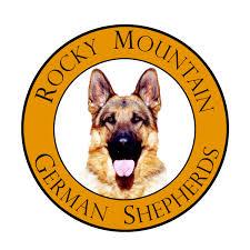 south australian german shepherd breeders german shepherd breeder in colorado rocky mountain german shepherds