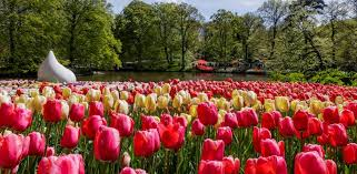 most beautiful flowers in the world spring flowers purewow