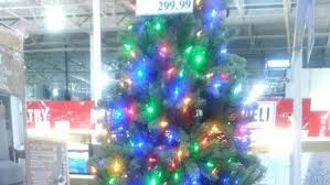 windsor costco already selling christmas trees windsor cbc news