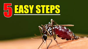 how to get rid of mosquitoes with 5 easy steps youtube