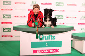 crufts bichon frise 2014 akc usa dogs win at crufts agility competitions akc dog lovers
