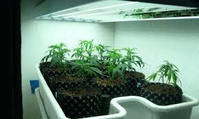 indoor garden lights home depot indoor plant light s garden lights amazon led grow setup