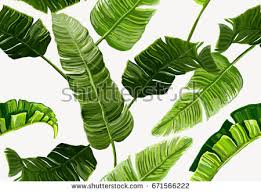 banana leaf pattern vector download free vector art stock