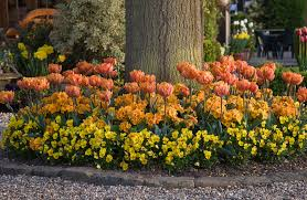bulb garden layout 10 tips for planting under trees