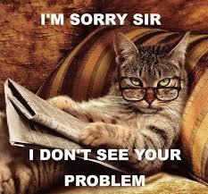 Cats Memes - cat memes cats of the internetz