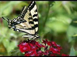 butterfly flower flower garden butterfly garden