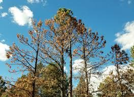 specialty tree removal rock solid enterprises llc
