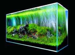 Aquascape Takashi Amano Maintaining A Beautiful Foreground In The Nature Aquarium