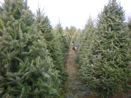 christmas tree prices christmas tree prices christmas lights decoration