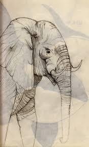 animal sketches rosebud illustration