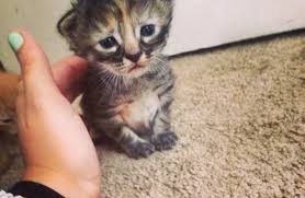 Sad Kitten Meme - purrmanently sad cat the saddest and cutest cat of the web