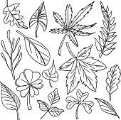 maple leaf outline vector download 1 000 vectors page 1