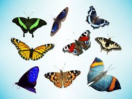 realistic butterfly free download clip art free clip art on