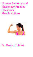 Human Anatomy Exam Questions Human Anatomy And Physiology Practice Questions Muscle Actions By