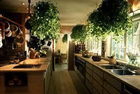 plante pour cuisine quelles plantes privilégier pour décorer un intérieur plantes