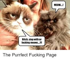 Purrrfect Meme - meow bitch stop with ur fucking meowz brat the purrfect fucking