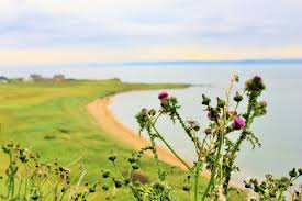 The Fife Coastal Path Home Seven Ways To Sandy Summer Days Rose Cottage