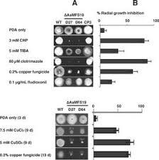 molecular basis of fungicide resistance scoop it