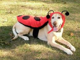 Small Dog Halloween Costumes 562 Halloween Puppies Costume Images