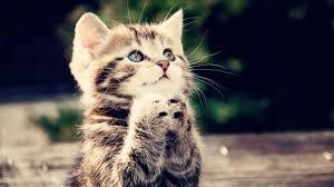 Cute Cat Meme Generator - cute cat praying meme generator imgflip
