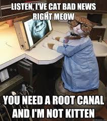 Meme Dentist - dentist cat memes quickmeme