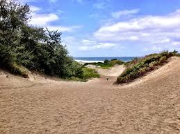 native plants grow on the sand dunes at this beach stock photo sigatoka sand dunes fiji u0027s first national park passing thru
