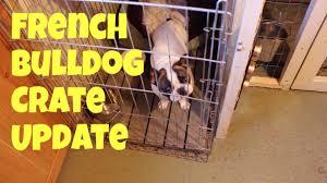 crate training french bulldog crate training final behaviour youtube