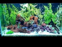 13 best fish tank images on pinterest