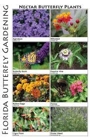 butterfly garden flowers dunneiv org