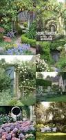 gypsy beard secret garden in the city backyard garden